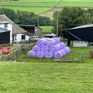 A brace of 'forces' with the clan to wrap the weekend, oh, and some happy bales #teesdale